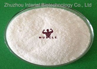 중국 Strongest Testosterone Steroid Androgens White Powder 17a Methyl 1 Testosterone 98% Purity 협력 업체